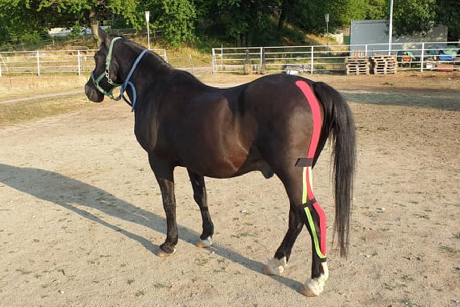 Kinesio-Taping-für-Pferde-